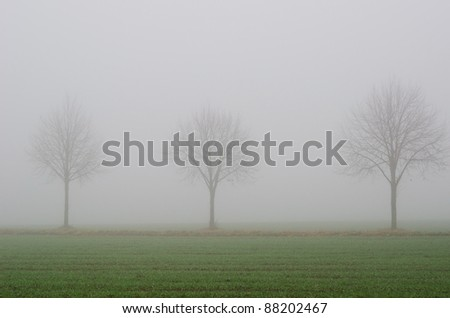 thick fog, field and trees in fall