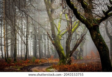 Thick fog on an autumn forest trail