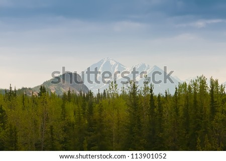 Thick forest filled with spruce trees and Alaska mountain range in the background
