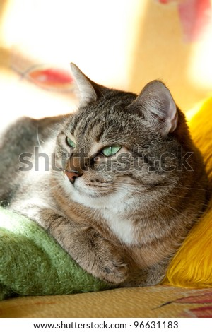Thick happy dozing cat
