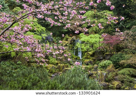 Thick spring foliage in a Japanese garden