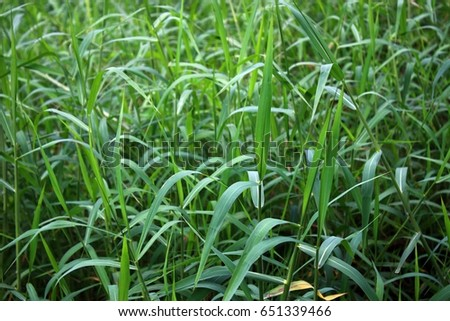 Thick thick green grass. #651339466