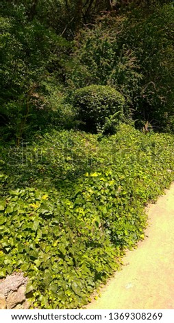 Thick vegetation. Luxuriant vegetation park. Screen of brushwood and trees. Ivy elegantly & thickly covers the ground. Wilderness of shrubs, trees & vine grows thickly in Nikitsky botanical garden. #1369308269