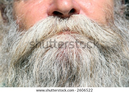 thick white and grey beard, macro detail photo, close up