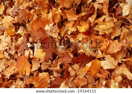 Thick yellow rug of autumn leaves