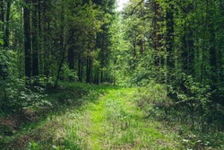 Thickets in dense forest. Scenic view with contrasts of deep forest. Beautiful woody landscape surrounded by many trees and lush vegetation. Forest scenery with rich flora. Atmospheric woodland.