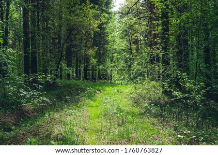 Thickets in dense forest. Scenic view with contrasts of deep forest. Beautiful woody landscape surrounded by many trees and lush vegetation. Forest scenery with rich flora. Atmospheric woodland. Сток-фото ©