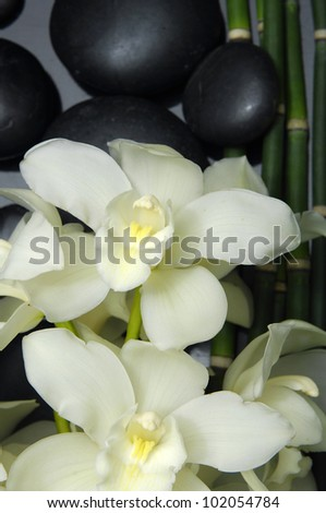 Thin bamboo and white orchid flowers on wet pebble stones