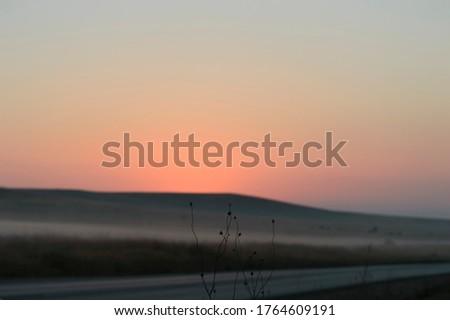 thin blades of grass at dawn