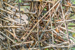 Thin dry branches of a deciduous tree are randomly piled in a heap