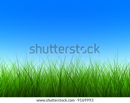 thin green grass with blue sky