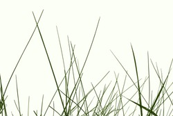 Thin green stalks of meadow grass isolated on a white background. Young juicy spring-summer herb close-up, raster clipart for design