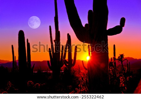 Third Sunset at Saguaro National Park near Tucson Arizona.