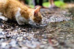 Thirsty cat drink from clear flooded water
