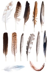 thirteen feathers isolate on white background