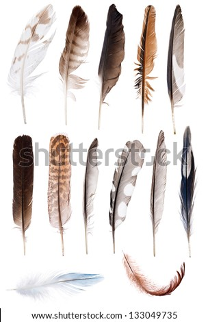 thirteen feathers isolate on white background #133049735