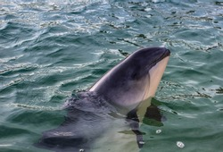 This beached porpoise was rescued on the Dutch isle Texel. He's smiling now and will hopefully be better soon!