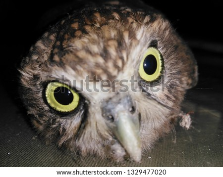 This beautiful owl picture of a very close place and high accuracy