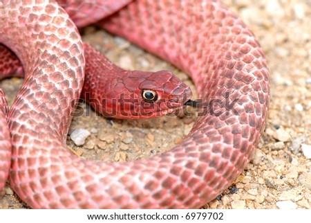 worm snake snake hill on lake ballard desert western ma