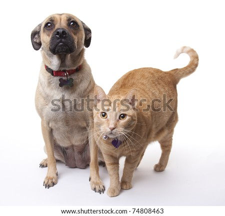 This dog and cat get along long enough for a photo. Both have blank tags visible on their collars.