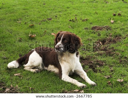 This dog has been digging while his master strims the grass