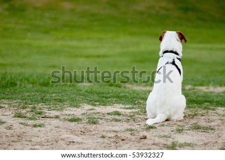 This dog was attentively watching and overlooking what the other dogs were doing. #53932327