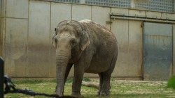 This elephant is isolated in the cage