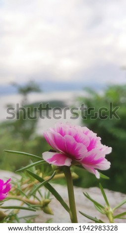 this flower is so beautiful so i took the photo, the color of this flower is pink and white and its so cute