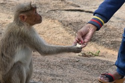 This handicapped, hungry monkey is fed by a kind person, and that thankful look in its eyes.