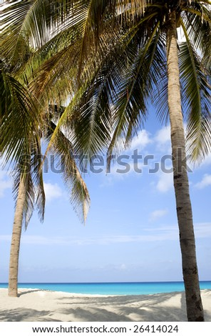 This image shows a beach scene framed by palm trees in Varadero, Cuba