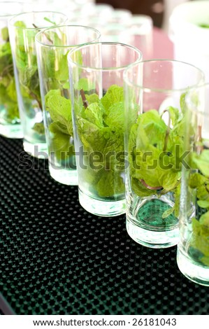 This image shows a line of Mojito glasses ready to be made.