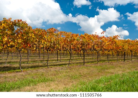 This image shows colourful vines in the WIne Region near Canberra, Australia