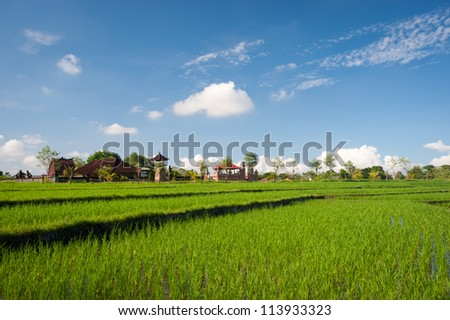 This image shows some harvested rice terraces in Bali, Indonesia