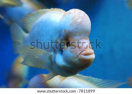 beautiful fishes in sea. eautiful fish in the sea