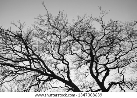 This is a black and white, abstract picture about a beautiful tree. The texture of the silhouette and the stillness of the nature suggest calmness and relaxation.