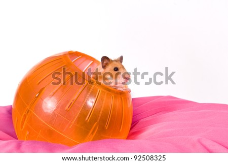 This is a Brown Hamster pooping his head and shoulders out of a Yellow Ball. The Pink bottom adds depth and a touch of Spring.