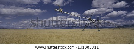 This is a golden field of wheat with its irrigation device.