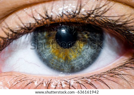 This is a macro of a human eye.  #636161942
