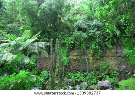 This is a nature vegetation near of waterfall, we can see more kind of plants in wet place in there. That plans make this area so fresh and make your soul so calm #1309382737
