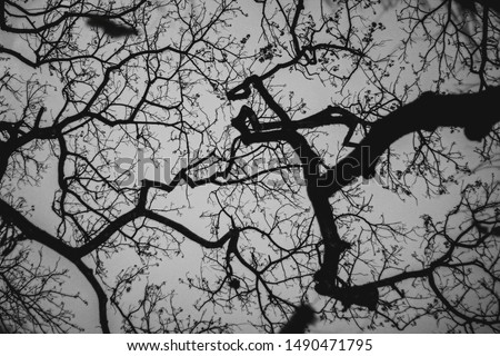 This is a photo of a branching tree branch, forming like a beautiful abstract painting, having an irregular shape and giving a classic and unique impression. #1490471795