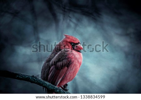 This  is a photo of a red cardinal male  and was taken at High Park