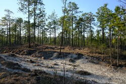 This is a photo of the sandy rocky terrain on the Backbone Trail in Kisatchie National Forest. This is located in Louisiana, it's the only national forest in Louisiana.
