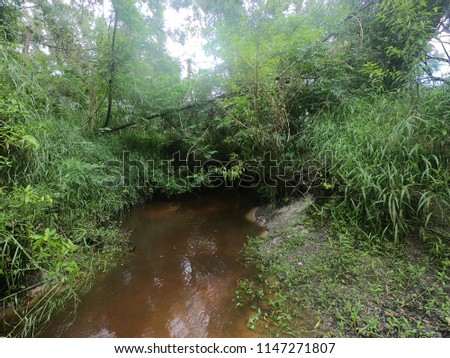 This is a photo taken while wading in a small creek near the Peace River, Florida. This photo was taken on a fossil hunting tour. #1147271807