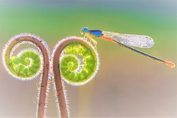 This is a picture of a dragonfly.
