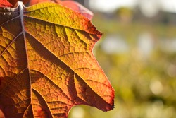 This is a picture of a leave in autum. The leave is very sharp and the background very blurry.