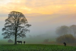 This is a picture of a sunrise trying  to brake through the early morning fog in a country pasture in Ireland