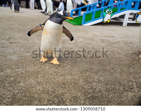 This is a picture of the penguins