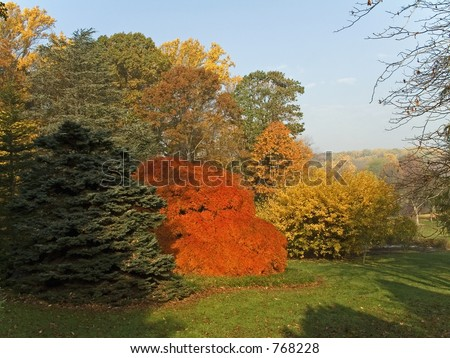 This is a shot of some vibrant fall colors at a park in New Jersey.