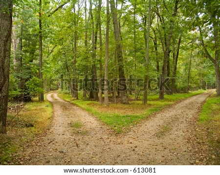 This is a shot of two hiking trails at Allaire State Park in New Jersey.