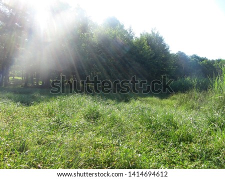 This is a sunny summer morning. Droplets of dew glisten on the grass.
